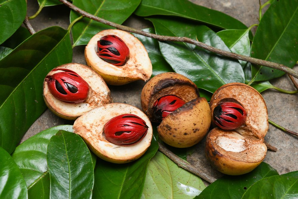 Nhục đậu khấu tươi vừa thu hoạch, phần vỏ màu đỏ và hạt bên trong. Ảnh: Santhosh Varghese/Shutterstock.com.