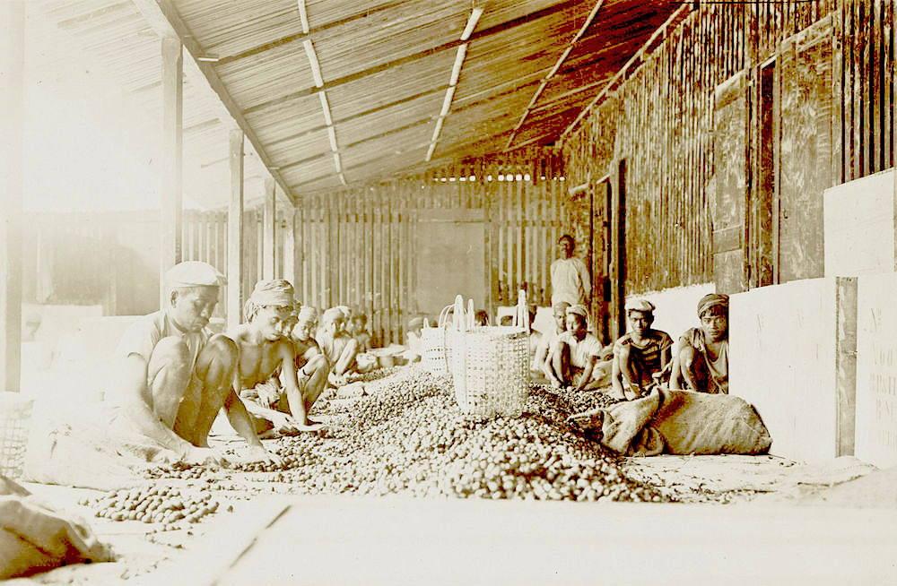 Người dân Banda chế biến hạt nhục đậu khấu (năm 1899 – 1900). Ảnh: Đại học Amsterdam.