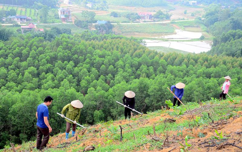 Trong bối cảnh Việt Nam sắp triển khai chương trình trồng 1 tỷ cây xanh, chúng ta cần xác định sẽ trồng loại cây gì và ở đâu để có thể hiện thực hóa mục tiêu góp phần chống biến đổi khí hậu và tăng mức độ đa dạng sinh học. Ảnh: baotuyenquang