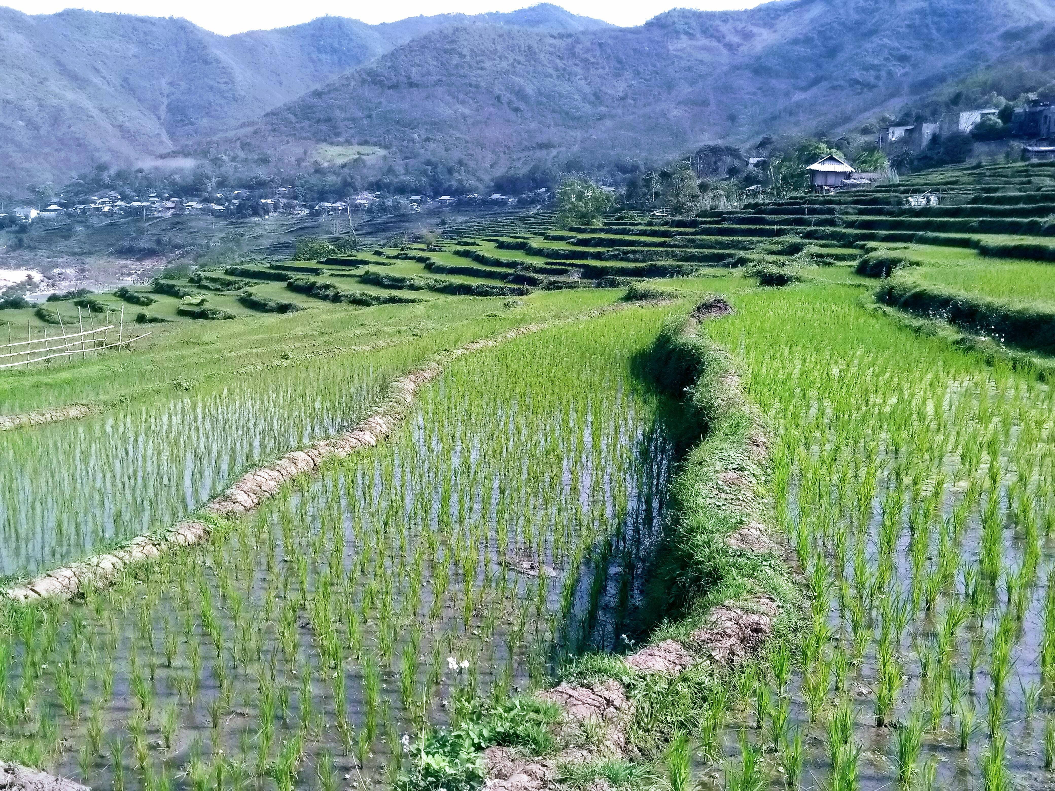 Ruộng bậc thang Tén Tằn, vùng đất giáp biên giới Lào. Ảnh: NP