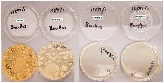 So sánh sự xuất hiện của vi khuẩn Bacillus spp trên các mẫu đầu lọc thuốc lá thu thập được | Ảnh: Mohajerani, A, et al 2020