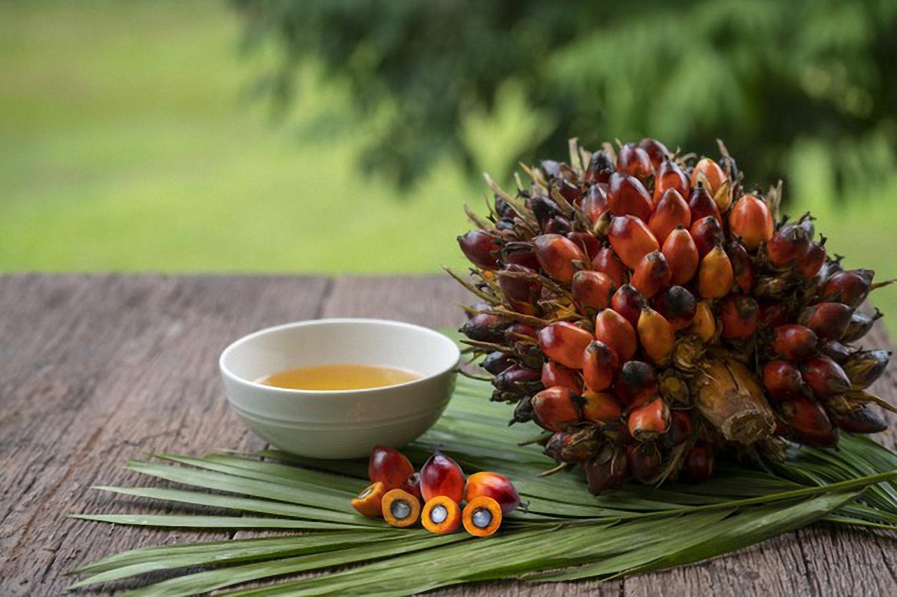 Dầu cọ: Loại dầu thực vật phổ biến nhất thế giới