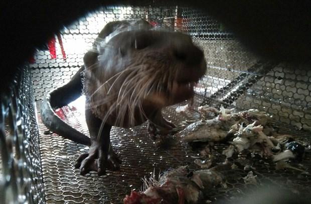 Buôn lậu động vật hoang dã ở Việt Nam chưa có dấu hiệu thuyên giảm - kết quả vietlott 09022020