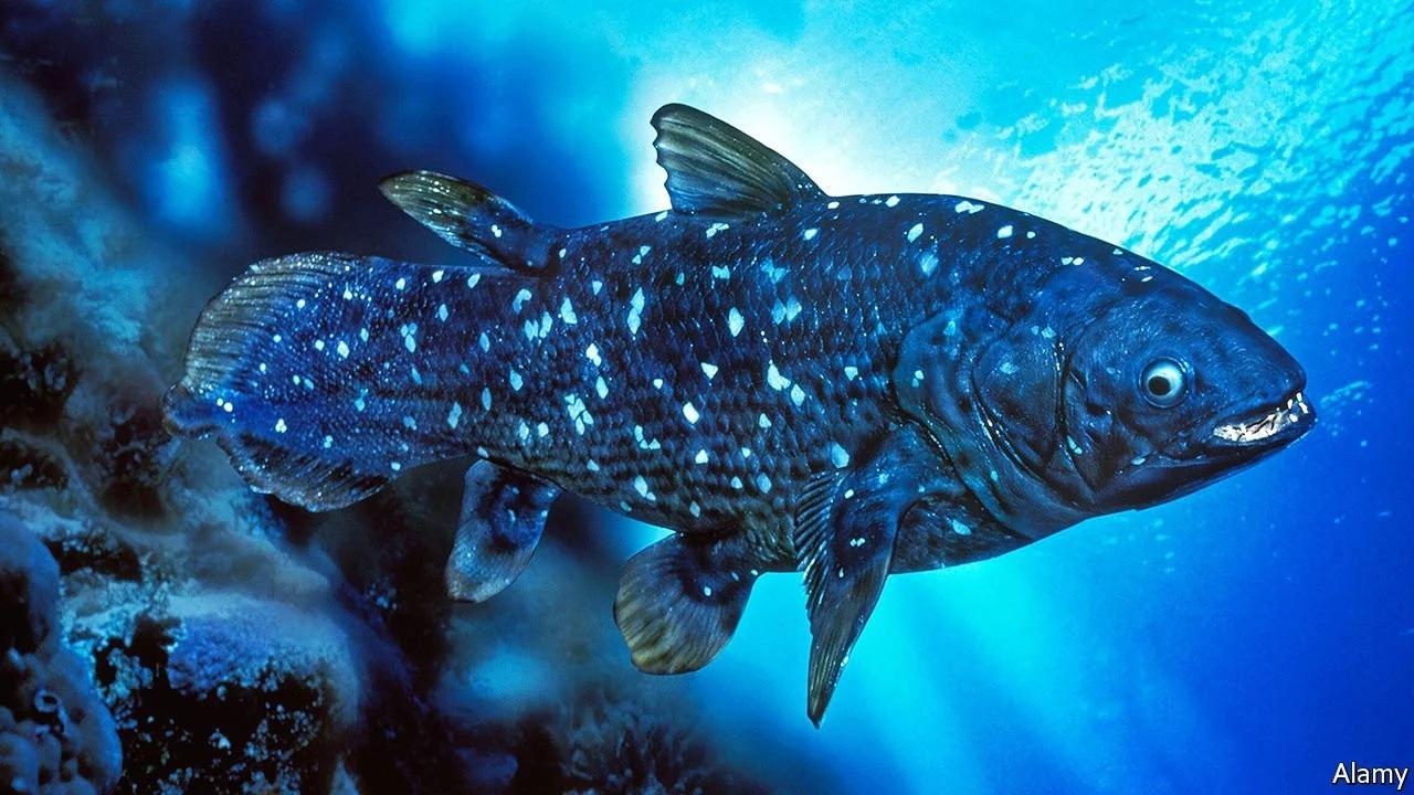 Cá vây tay sống lâu như con người và có thời gian mang thai dài kỷ lục