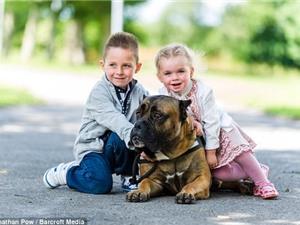 Bên trong nơi huấn luyện chó bảo vệ người giàu