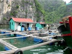 Kỹ thuật nuôi cá bằng lồng đồng cho năng suất chất lượng cao