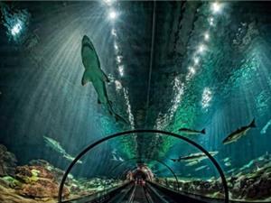 Những đường hầm xây dựng từ vật liệu độc dị nhất