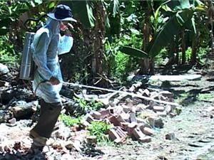 Cúm H5N1 xuất hiện trên gia cầm ở Ninh Thuận