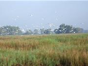 Vườn quốc gia Tràm Chim đang hồi sinh ấn tượng