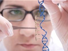 Mỹ, Trung Quốc, Anh bàn về biến đổi gene người