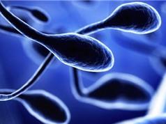 Tạo ra tinh trùng người từ tế bào gốc