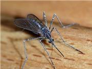 Ngạc nhiên trước khả năng sống sót kì diệu của muỗi