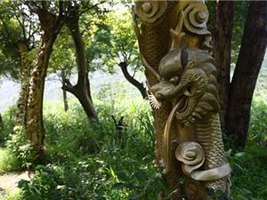 Độc đáo thân cây sống như rồng bay phượng múa thực
