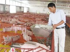 Ngành chăn nuôi cần ứng dụng công nghệ cao, thực hiện liên kết chuỗi