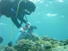 Cấp phép tổ chức nước nghiên cứu khoa học trong vùng biển Việt Nam