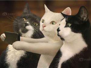 """Ảnh siêu đáng yêu khi mèo chụp ảnh """"tự sướng"""""""