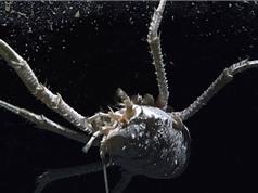 Điểm danh động vật biển quái dị nhất vừa phát hiện