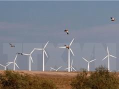 UAE đầu tư 35 tỷ USD phát triển năng lượng sạch đến 2021