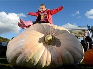 Bí ngô khổng lồ nặng hơn 850 kg