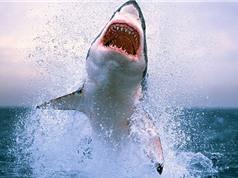 Những sự thật gây sốc ít được hé lộ về cá mập