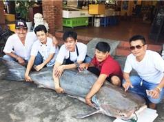 """""""Thuỷ quái"""" khổng lồ từ Campuchia về Sài Gòn"""