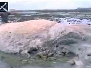 Sinh vật lạ lùng xuất hiện sau thảm họa sóng thần Nhật Bản