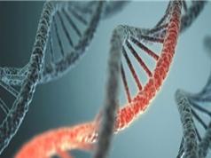 Con người trường thọ nhờ tắt gen lão hóa