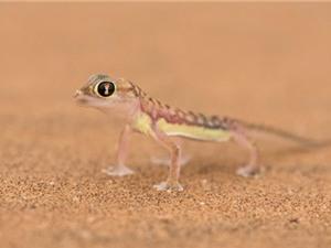 Những kiểu thích nghi ấn tượng của động vật sa mạc