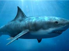 Phát hiện hóa thạch cá mập khổng lồ 300 triệu năm