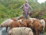 Lợn lập công lớn giúp các nhà khảo cổ học