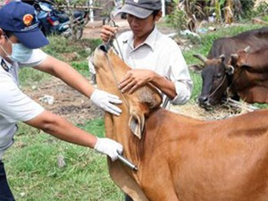 Đẩy mạnh nghiên cứu vắc xin, kiểm soát bệnh lở mồm long móng