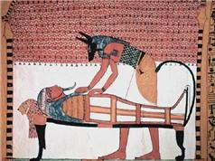 Tục ướp xác động vật của người Ai Cập cổ đại