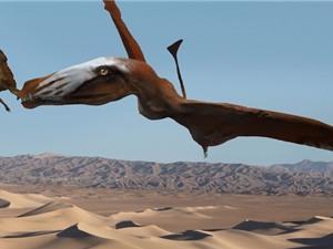 """Phát hiện loài khủng long """"chúa tể bầu trời"""""""