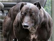 Trung Quốc tạo siêu chó biến đổi gen tặng nhân loại