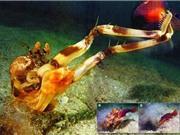 Sự thật rùng mình về những loài thủy quái đại dương