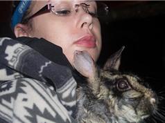 Những hình ảnh cực hiếm về loài thỏ vằn mới phát hiện ở rừng Trường Sơn