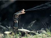 10 loài động vật có nọc độc đáng sợ nhất thế giới