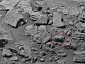 Phát hiện gấu trên Sao Hỏa?