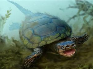 Phát hiện rùa cổ đại kỳ lạ nhất Trái đất