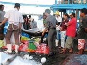 Đánh bắt cá xa bờ: Ngư dân Tiền Giang ứng dụng lưới đuôi vây