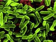 Việt Nam: Nhiều siêu vi khuẩn kháng mọi loại kháng sinh xuất hiện