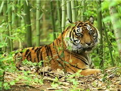 Top 10 loài động vật có nguy cơ tuyệt chủng cao nhất