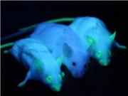 Biến đổi gene động vật - lịch sử qua 10 thí nghiệm
