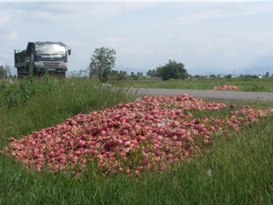 Áp dụng khoa học công nghệ để nâng giá trị nông sản Việt