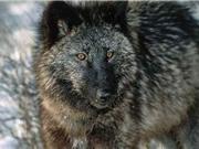Những sát thủ săn mồi nguy hiểm nhất thế giới