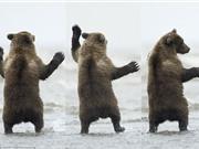 Gấu con nổi hứng nhảy múa như vũ công