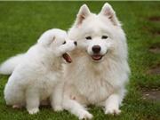 Những tiết lộ mới gây sốc về loài chó