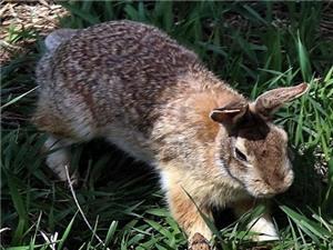 Thỏ bạo gan đối đầu rắn dữ