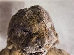 Phát hiện xác ướp 2 sư tử hang hơn 12.000 năm tuổi