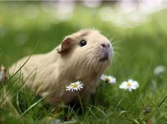 """Những """"sát thủ"""" động vật có vẻ ngoài đáng yêu"""